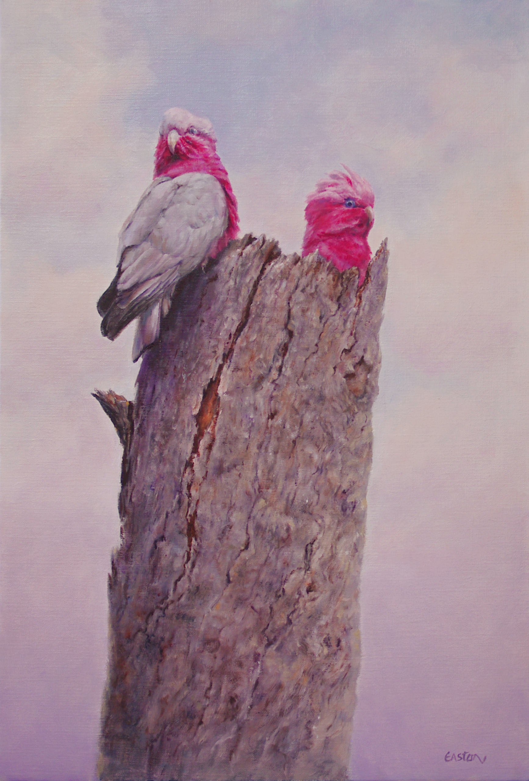 Pink and Grey Cockatoo