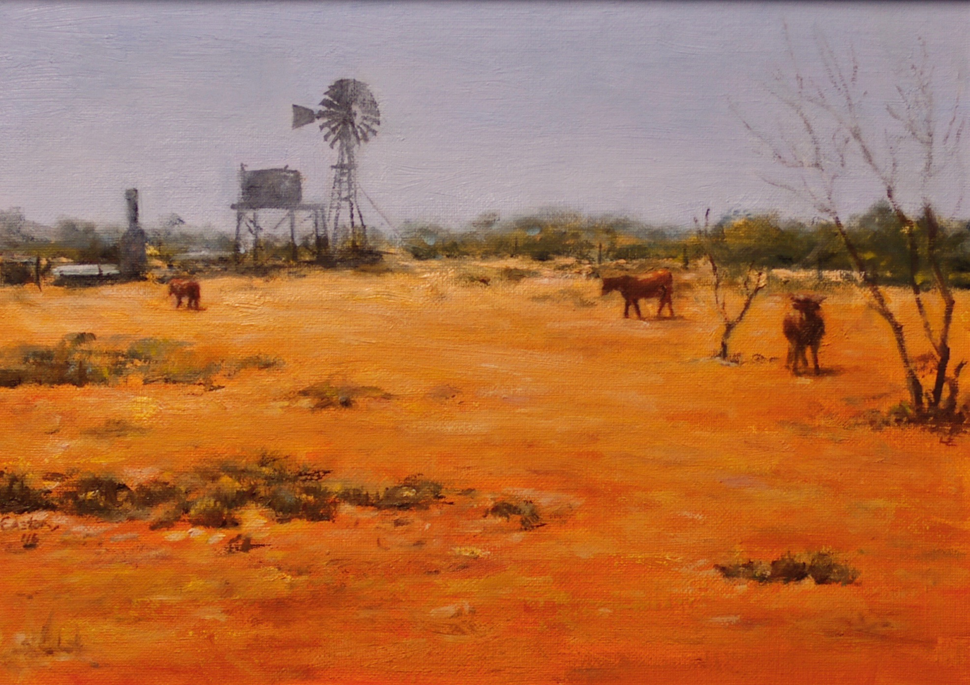 Roaming cattle, outback, Western Australia