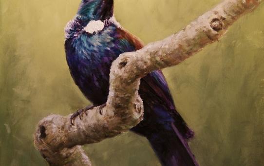 New Zealand birds, tui, bird painting